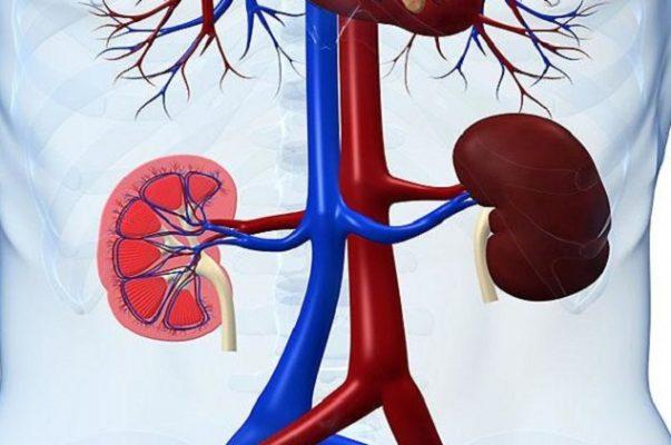 Dinh dưỡng cho bệnh nhân thận mạn (1)